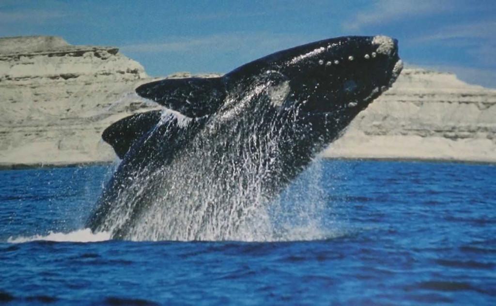 Patagonia per vedere le balene
