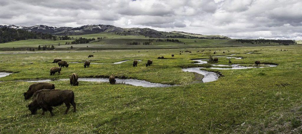 Lamar Valley nel parco di Yellowstone