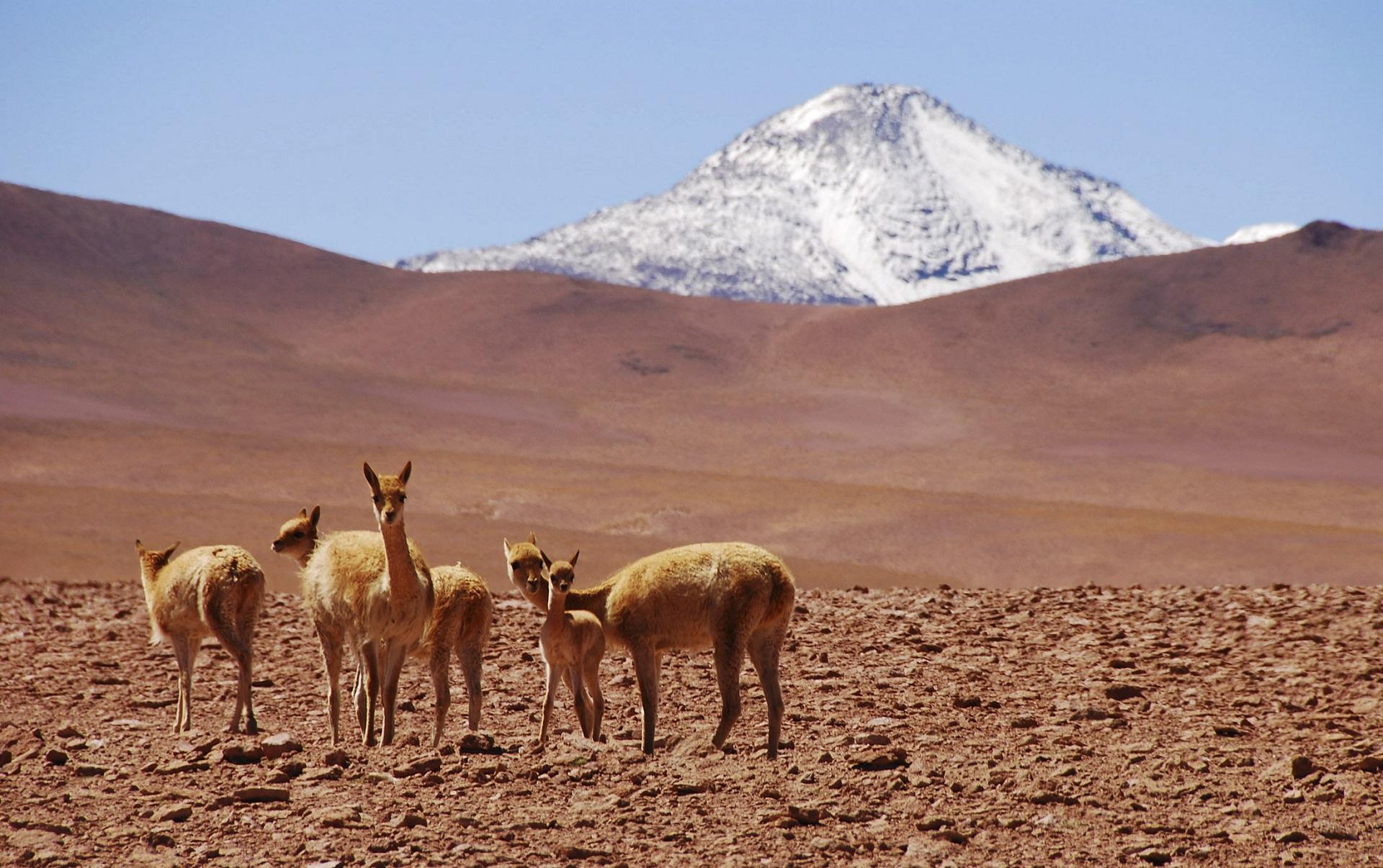 Viaggio in Cile da Atacama ai fiordi
