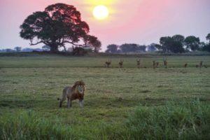 Guida dello Zambia
