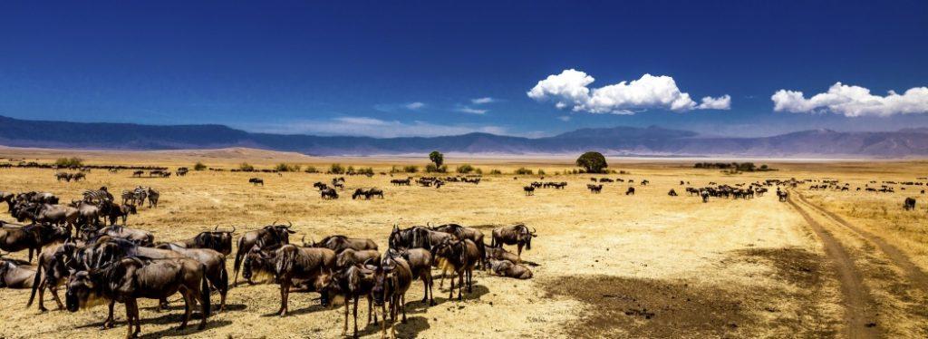 parchi africani