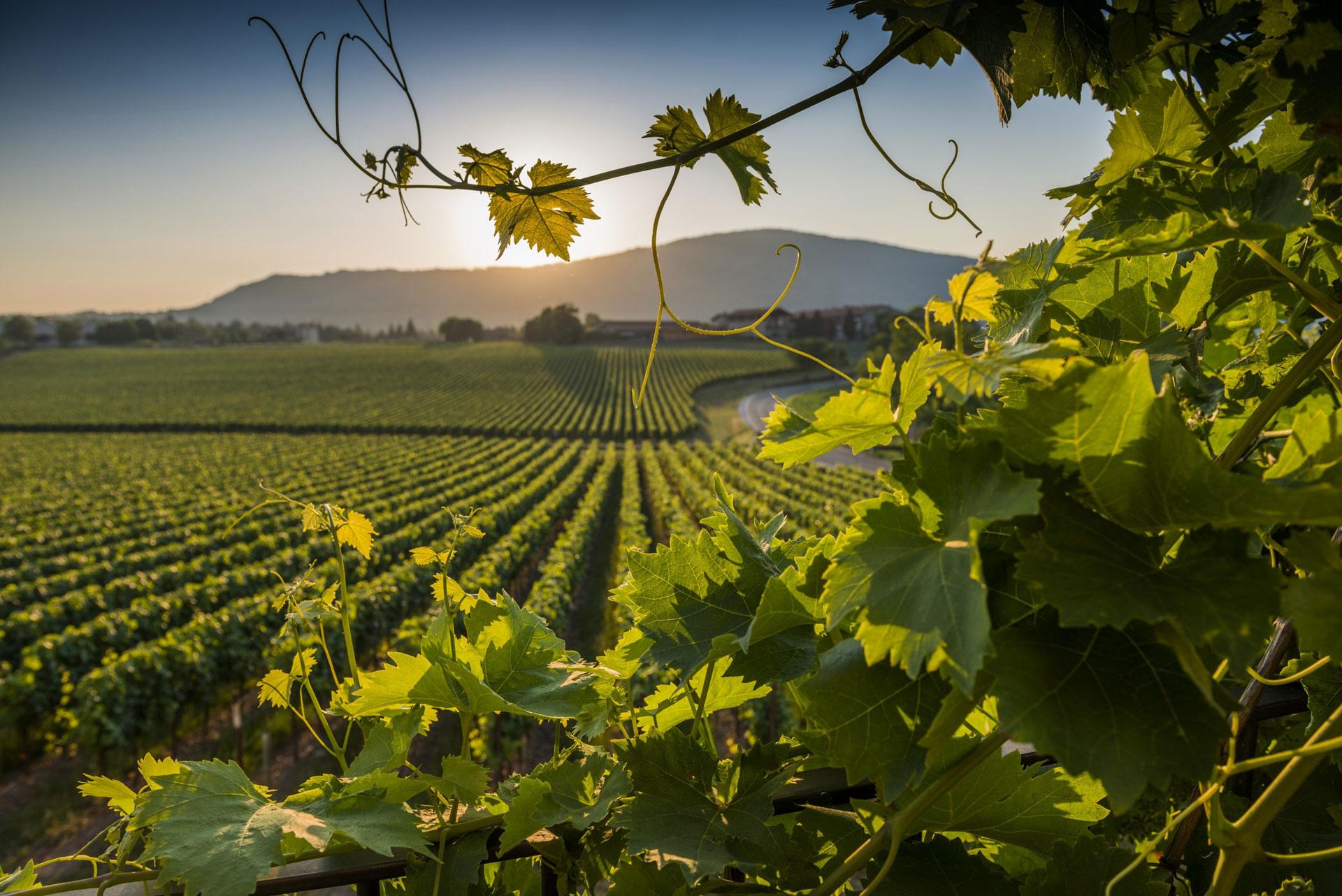 viaggio in franciacorta, la terra del vino